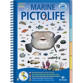 Image de Marine PICTOLIFE Atlantique Tropical